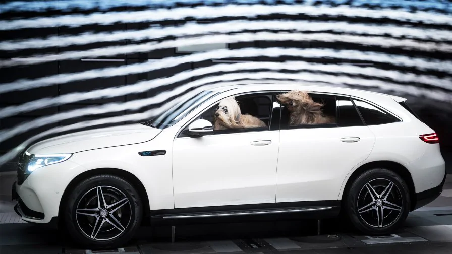 Mercedes Wind Tunnel Test with Dogs - Image credit: MERCEDES BENZ